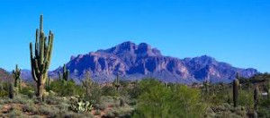 The charming barren Sonoran desert